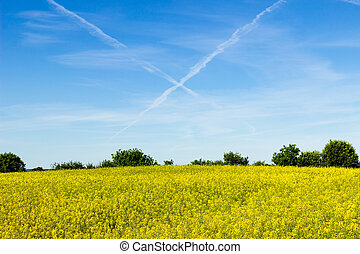Contrails and rapeseed field