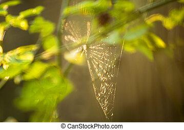 contrailuminación, tela de araña