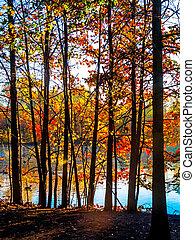 contrasté, coloré, arbres