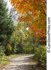 Contrasting colors of the autumn forest