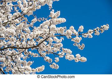 contre, fleur, fleurs, bleu, arbre, pomme, ciel blanc