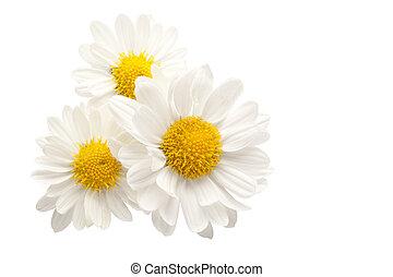 contre, fleurs blanches, trois, fond