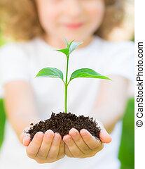contre, plante, vert, jeune, fond