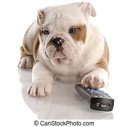 controle, remoto, buldogue, -, cão, nove, inglês, antigas,...