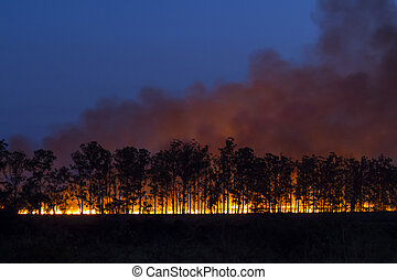 Controlled fire at dusk with silhouetted trees