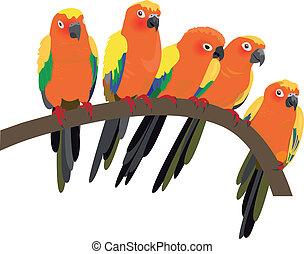 conure, sol, klar, papegøjer, hvid