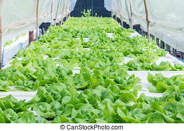 Convert vegetables Non-toxic green healthy choices.