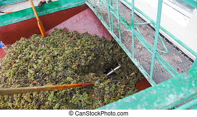 Conveyor and grape - Wine factory