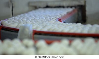 Conveyor belt for chicken eggs. Slow motion - Conveyor belt...