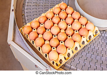 Conveyor belt transporting crates with fresh eggs on an...