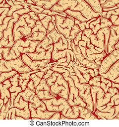 convolutions., cerebro, seamless