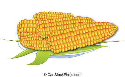 cooked corn - Cooked corn. Boiled corn. Corn on a white ...
