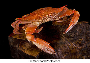 Cooked Crab. - Cooked crab on a interesting piece of wood.