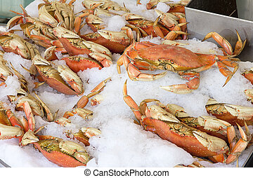 Cooked Dungeness Crabs on Ice - Cooked Dungeness Crabs...