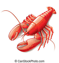 Cooked lobster isolated on white photo-realistic vector ...
