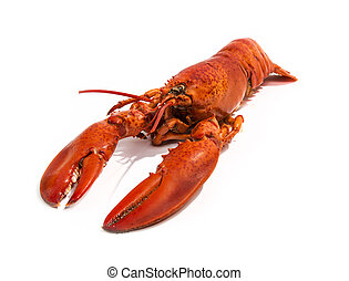 Cooked Lobster Isolated on White