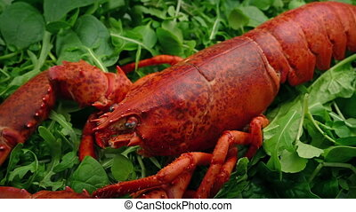Cooked Lobster On Greens - Cooked red lobster on greens...