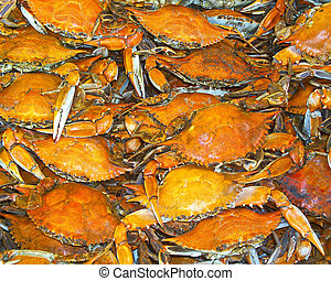 Cooked Maryland Blue Crabs Callinectes sapidus