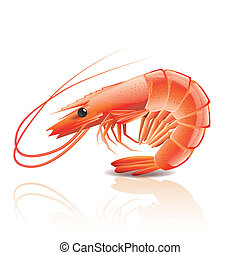 Cooked shrimp isolated on white photo-realistic vector...