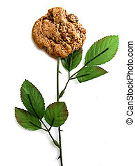 Cookie on a rose stem on white background