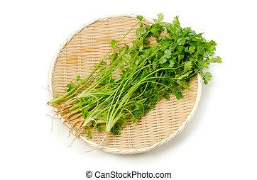 coriander - Cooking ingredient series coriander. for adv etc...