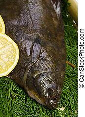 flatfish - Cooking ingredient series flatfish. for adv etc. ...