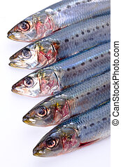 Cooking ingredient series sardine. for adv etc. of restaurant, grocery, and others.