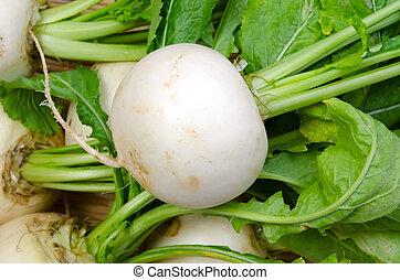 turnip - Cooking ingredient series turnip. for adv etc. of ...