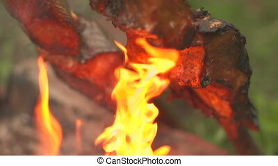 Cooking pieces of fish on an open fire side view