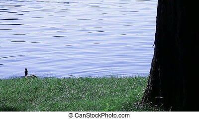 Cool Blue Early Morning Pond Waters Shore Grass and Tree