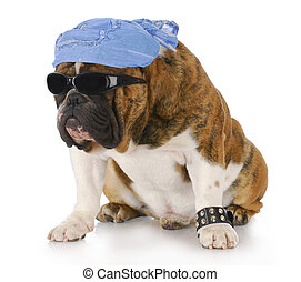 cool dog - dog wearing skull cap and cool sunglasses with...