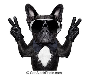 cool dog - french bulldog with victory or peace fingers and...