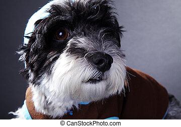 cool dog in studio