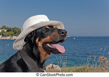 cool dog with hat enjoying the sun