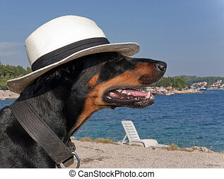 cool dog with hat