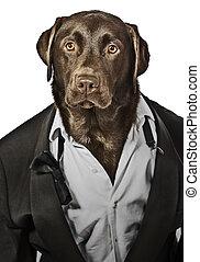 Cool Looking Labrador in Tuxedo - Top Dog