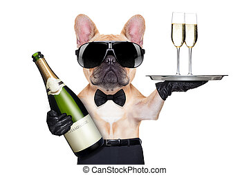 cool party dog - french bulldog with champagne bottle, ...