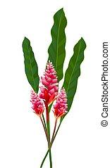 Cool Pink Flower Cartoon