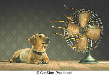 Cool - The dog is cooling down with the fan while watching...