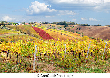 cool vineyard