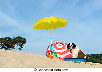 cooling down for dog at the beach