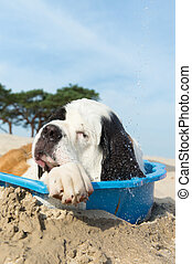 cooling down for dog