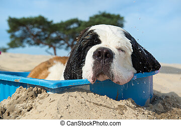 Dog is having a cooling down with water in the summer