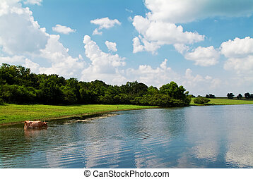A cow standing in the calm waters of a large pond enjoying a refreshing drink.