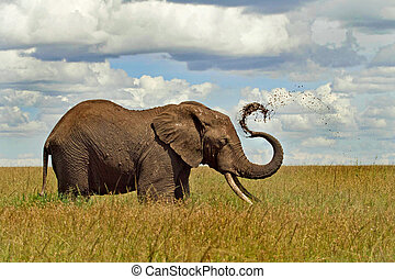 Cooling off - An elephant cooling off with a mud shower,...