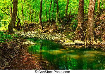 copas árvore, verde, riacho, floresta