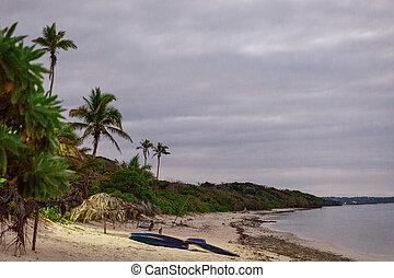 coperto, alba, su, il, corallo, costa, di, figi