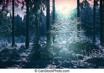 coperto, alberi inverno, neve, pieno, paesaggio, moon.