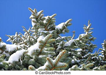 coperto, albero, neve, pino