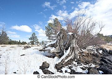 coperto, ceppo, neve, albero